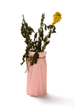 Pot Of Faded Chrysanthemum Flo...