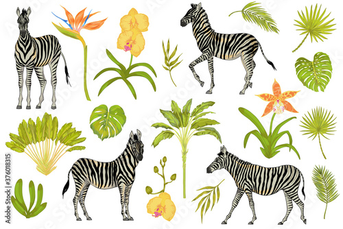 Vector cute realistic illustration set of zebras with tropical flowers, trees, p Billede på lærred