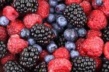 Wild Berries In High Definition