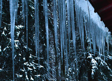 Big Icicle Winter Snow Forest
