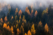 Autumn Nature Background Forest In Fog