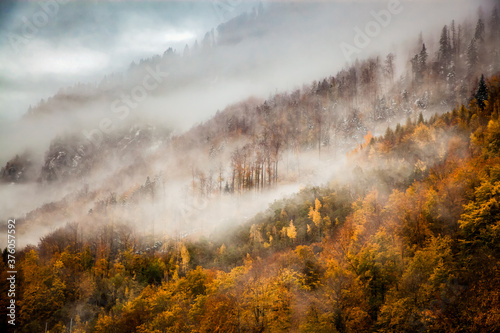 Foto foggy forest background in autumn