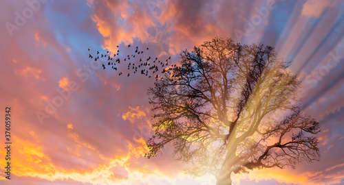 Silhouette of birds flying with lone dead tree at amazing sunset, sun rays in th Canvas Print