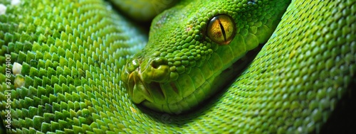 A body of the green tree python Morelia viridis close-up Fototapeta
