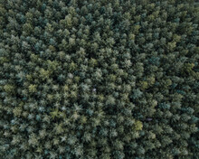 Forest Drone View