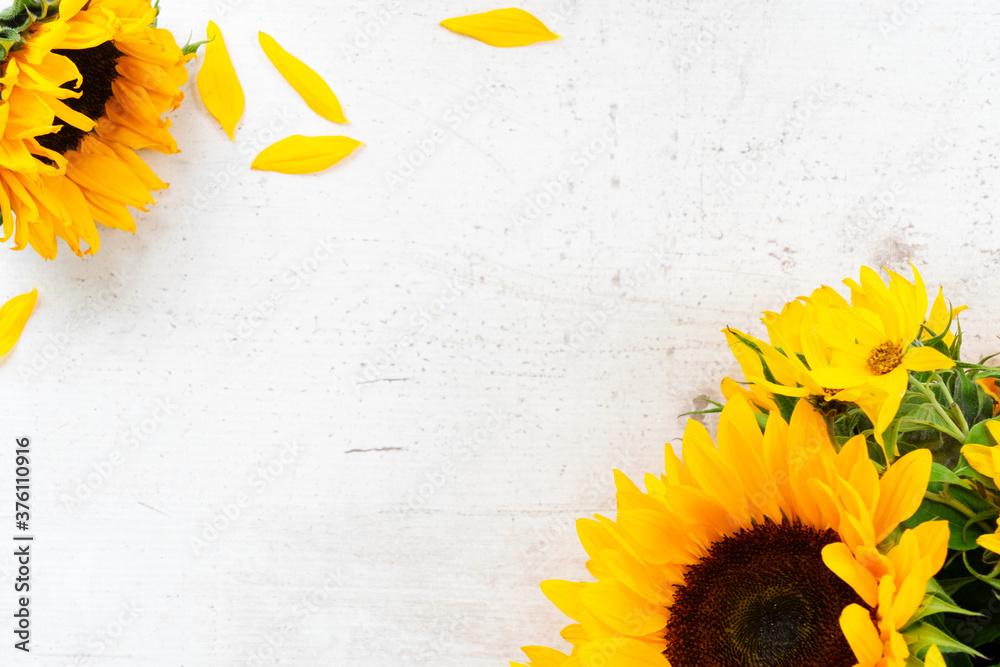 Fototapeta Sunflowers on white