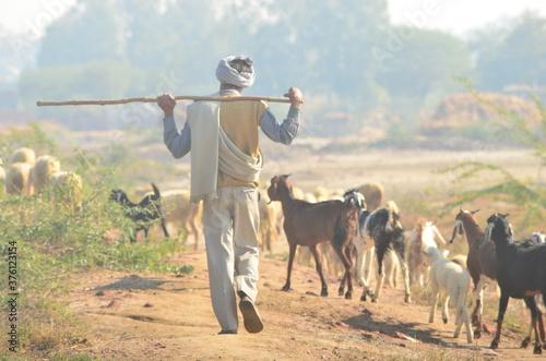 Fotografie, Tablou Sheep Shepherd