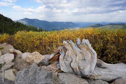 Foto Autumn at Mt. Goliath Natural Area Mt. Evans Colorado