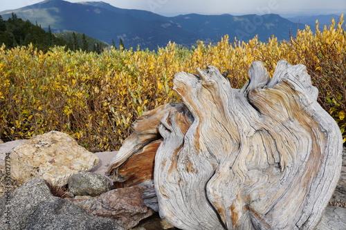 Autumn at Mt. Goliath Natural Area Mt. Evans Colorado Fotobehang