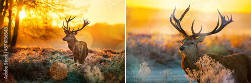 deer, animal, elk, wildlife, stag, antlers, nature, wild, mammal, grass, antler, Fototapete