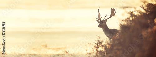 Leinwand Poster deer, animal, elk, wildlife, stag, antlers, nature, wild, mammal, grass, antler,
