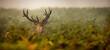 canvas print picture - deer, animal, elk, wildlife, stag, antlers, nature, wild, mammal, grass, antler, forest, park, animals,Hirsch, Tier, Elch, Tierwelt, Hirsch, Geweih, Natur, Wild, Säugetier, Gras, Geweih, Wald, Park,