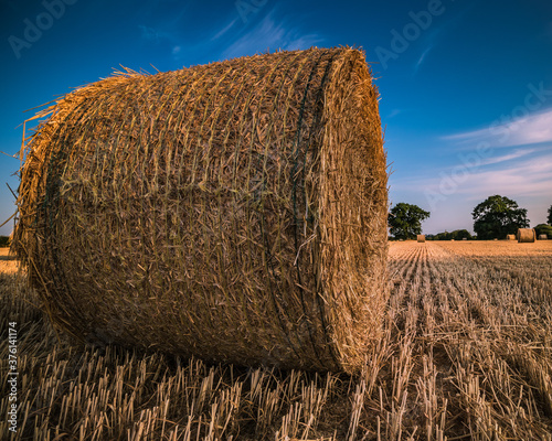round hay bales after harvesting in a field Wallpaper Mural