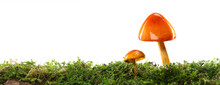 Two Orange And Yellow Mushrooms On Wet And Humid Green Mossy Forest Floor. Isolated On White.