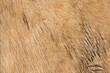 beige horse pelt texture for your design