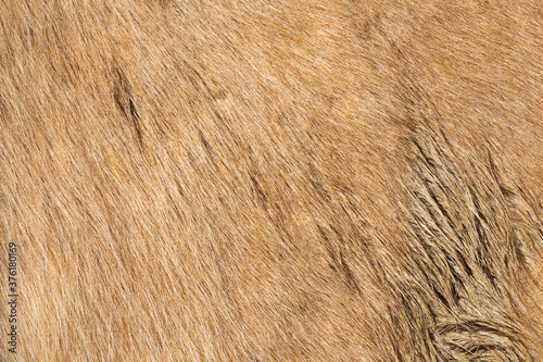 Slika na platnu beige horse pelt texture for your design