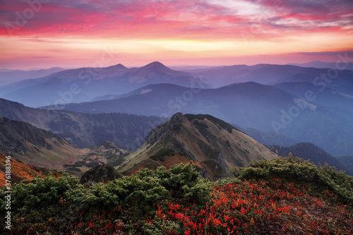 Obraz Landscape with beautiful sunset, cloudy sky and orange colorful horizon. Autumn morning in high mountains. Natural landscape. The lawn with bushes blueberry. A place to relax in the Carpathian Park. - fototapety do salonu