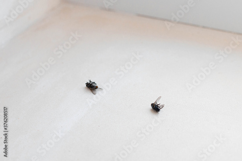 Many dead flies isolated on white background Wallpaper Mural