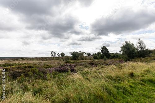 Fototapeta moorland landscape with a tree