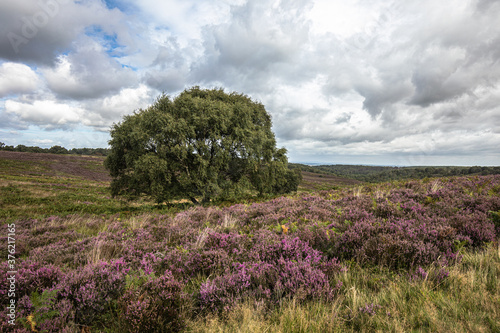 Photo moorland landscape with a tree
