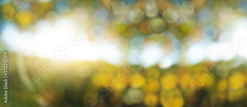 Sun shining through the trees. Abstract autumn background. Fotobehang