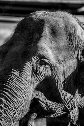 Photo Animales en semilibertad descansando al aire libre, elefante, camello, leonas, c