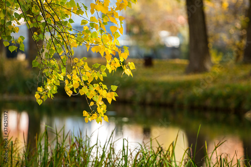 Branch of a tree in autumn with a river in the background