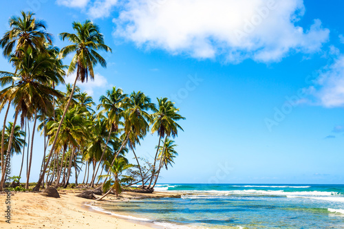 Cuadros en Lienzo Palm trees on the wild tropical beach in Dominican Republic
