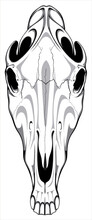 Image Of A Horse Skull That Can Be Used For Printing On T-shirts, As A Logo Or For Tattoos.