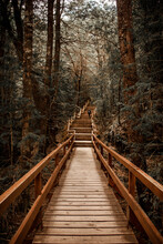 Wooden Path Through The Forest.