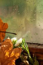 Photo With Autumn Mood. Light ...