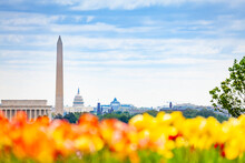 National Mall Lincoln Memorial Washington Monument Obelisk And United States Capitol Building Behind The Tulips