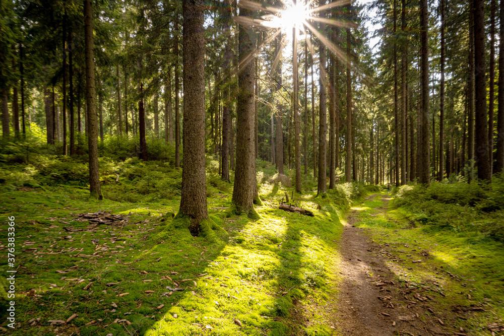 Fototapeta Vogtland, schöne Landschaft in Sachsen
