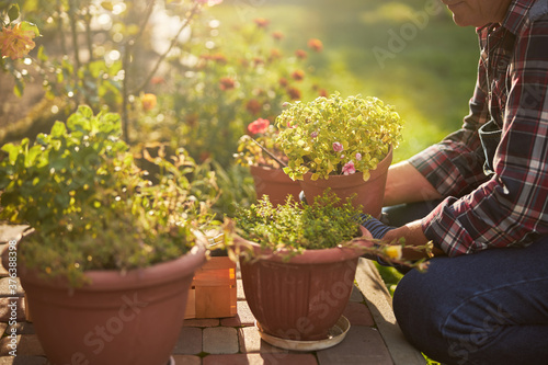Canvastavla Responsible senior man taking care of the potted plants