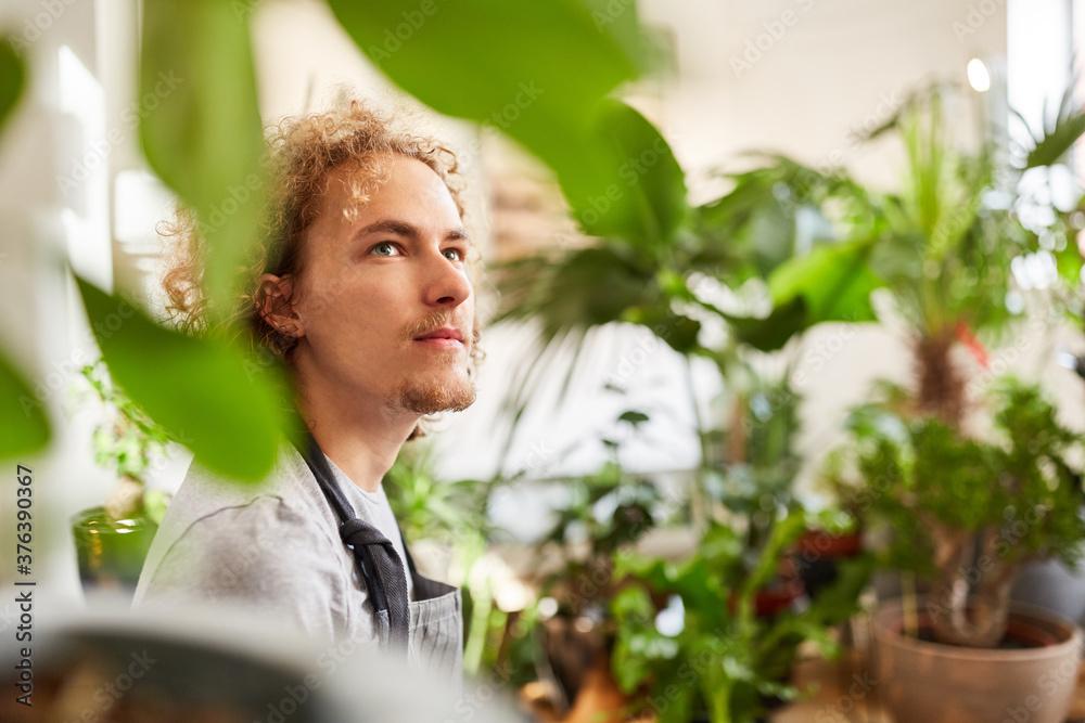 Fototapeta Gardener or florist with many green plants