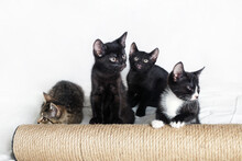 Four Cute Kittens And Scratchi...
