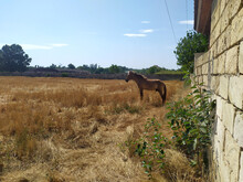 A Horse Standing Alone In The ...