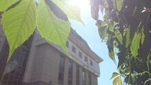 View On A Building Through Leaves On Tree. Traveling At The Street. Bright Sunny Day