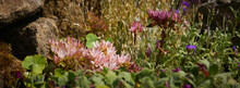 Unidentified Flowers In Full B...