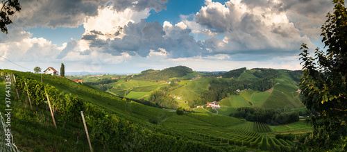 Vineyard panorama on an Austrian countryside, Styrian Tuscany