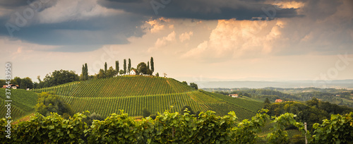 Vineyard on an Austrian countryside, Styrian Tuscany