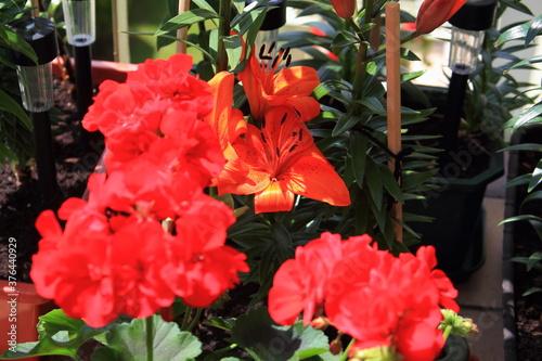 Fototapeta Kwiat, Kwiaty, Natura, Przyroda, Bukiet, Fiołek,  obraz