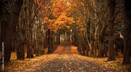 Fotografía Chutes de feuilles en automne, arbres, forêt, végétation, bois, feuilles, jaune