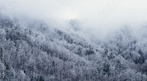 Fotografie, Obraz Forêt recouverte de neige, hiver, froid, arbres, végétation, paysage