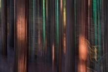 SEQUOIA - SEQUOYA (Sequoia Sem...