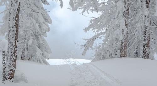 Traces de pas dans la neige, hiver, neige, route