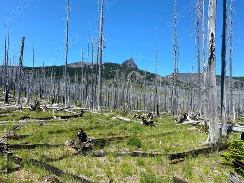 wildfire regrowth cascades oregon