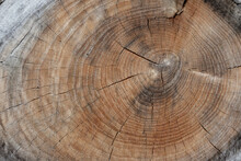 Wood Log Background Texture Wi...