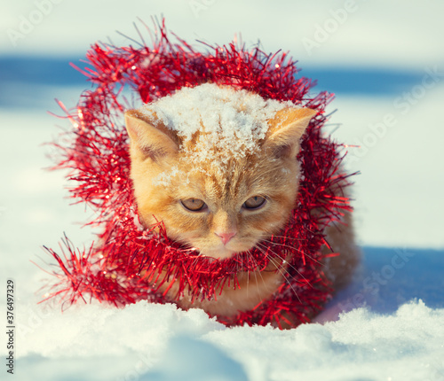 Portrait of a ginger kitten, entangled in red Christmas tinsel. Cat walking in the snow outdoors