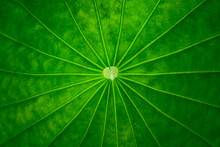 Abstract Line On Green Leaf Wi...